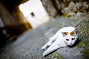 Cat rest by Etienne-RUGGERI