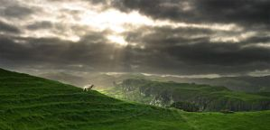 NewZealand country side by Cleo101