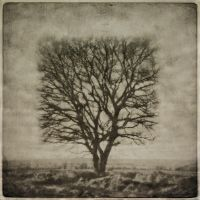 Square tree by Kleemass