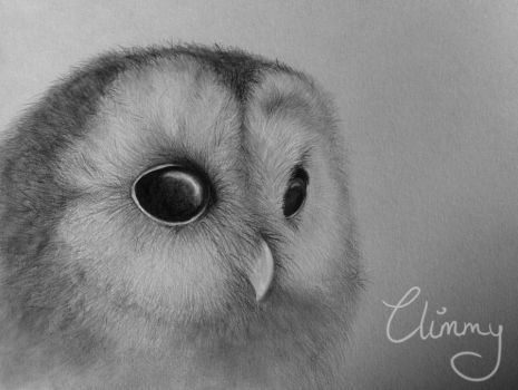 Little Owl by Climmie