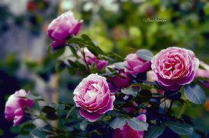Summer scent. by Phototubby