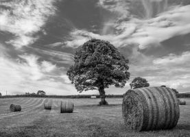 Hay! (b) by friartuck40