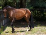 My new mare - Galana by Deirdre-T