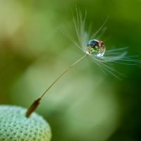 Cradled Droplet by Sonny2005