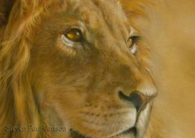 Lion close-up by spcarlson
