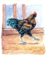 Strutting Rooster by angelac