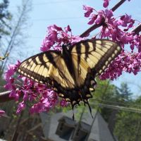 Butterfly 1 by EverydayStock