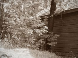 behind the shed by Flaminia