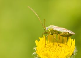 green on yellow... by clochartist-photo