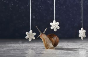 Season's Greetings Snail cards 2 by MichelleRamey