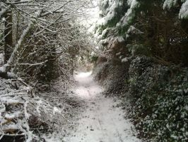 The way to Narnia by wolf-in-spirit