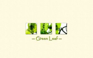 Green Leaf Wallpaper by clasixart