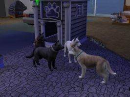 Sims 2 Pets - 'My Wolves' by WolfoxOkamichan