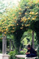 Flower Arch by BengalTiger4