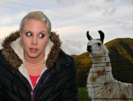 Llama From Hell by veronicagibson