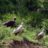 vultures by mimose-stock
