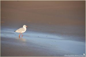Beach in the morning by brijome