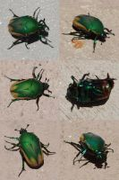 Green Beetle Stock by chamberstock