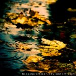 Rain, Leaves, and Autumn by TwiggyTeeluck