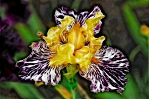 Iris Abstract by digitalpix4all