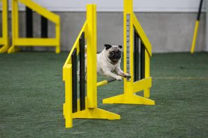 Agility with Monty part III by pimeydenmorsian