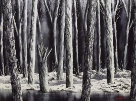 Black and White Forest by DonBowling