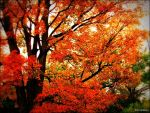 Autumn Ambitions by Anj3lla