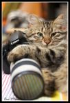 Cats Love Canon by jevigar