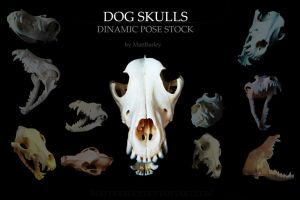 Dog skulls stock by MattBarley