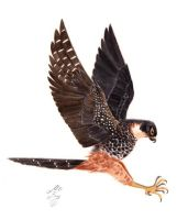 Falcon_Watercolour-Realistic by artofMilica