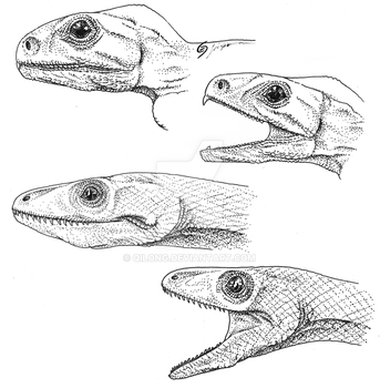 Lizards Without Lips by Qilong