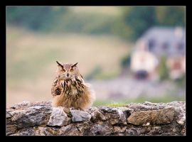 Owl on a Wall by Alex999