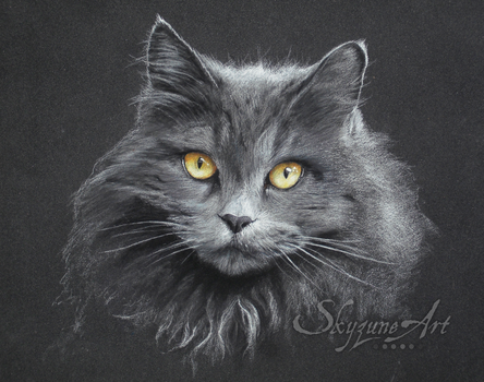 SKYZUNE ART - GREY CAT by SKYZUNE-CREATION