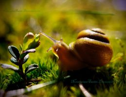 Mr.Snail by NorwegianAnette