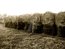 A Needle in a Haystack by MelikaLouise