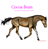 Cocoa Bean for Horse Heaven by ilove-horses