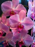 Orchid Show 2015 no.17 by Foozma73