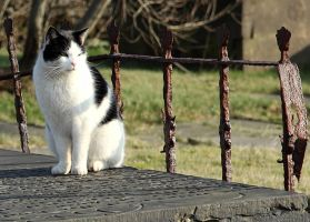 Heights Church - Cat-a-tombs by richardjwakefield