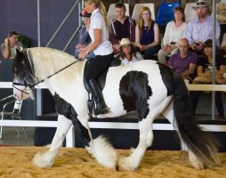 STOCK - 2014 Total Equine Expo-57 by fillyrox