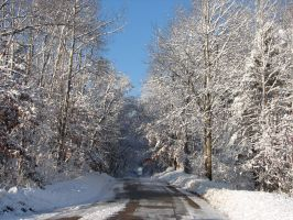 Wisconsin Woods Winter Road 1 by FantasyStock