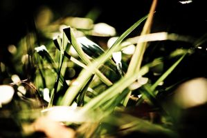 Sunset Grass by cmarhoover