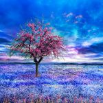 Spring Impression by JacqChristiaan
