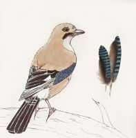A jay and its feathers by DevilishEvelyn
