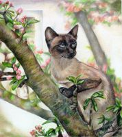 Siamese Cat Bird Watching by bigcatdesigns