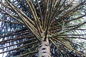 Spiky tree by Living-Life-Loud