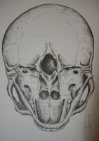 Base View Of Skull by mo013