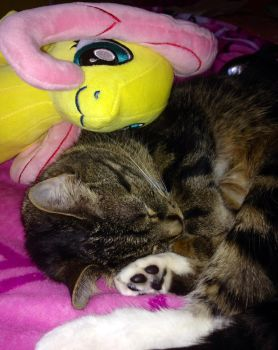 Kitty Cuddling with Fluttershy by 462gha