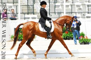 Collen Rutledge Dressage III by zeeplease