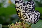 Butterfly by LocalGirlPhotography