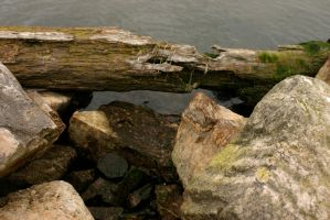 Rocks in the water 2 by nwalter